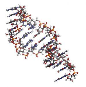 Micro RNA (miRNA, hsa-miR-133a) structure, computer model