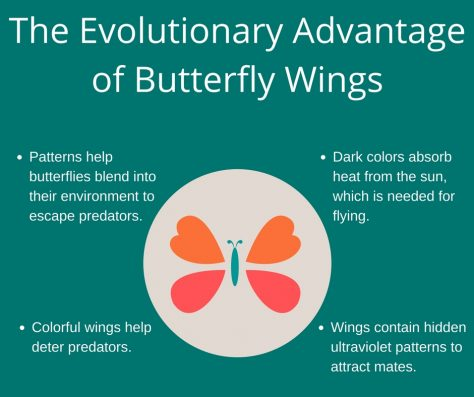 Patterns help butterflies blend into their environment to escape predators.