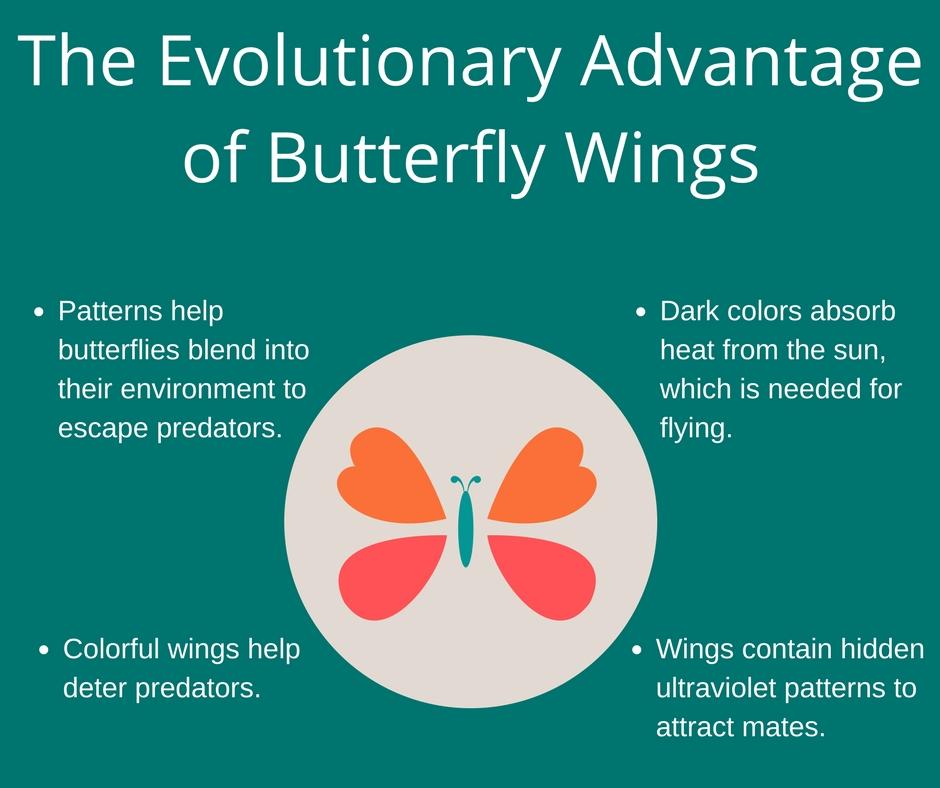 Patterns help butterflies blend into their environment to escape predators.