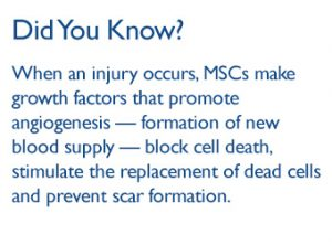 Did you know: when an injury occurs, MSCs make growth factors that promote angiogenesis - formation of new blood supply - block cell death, stimulate the replacement of dead cells and prevent scar formation.