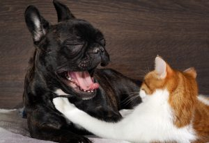 dog yawning at a cat