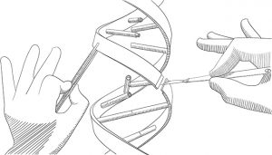 Manipulation of DNA with bare hands, tweezers and a scalpel - drawing