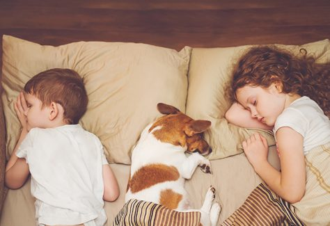 kids dog sleep iStock 842912340 1