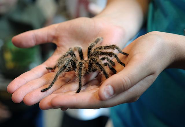 spider iStock 182823056