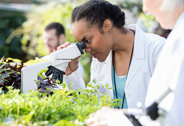 female scientist looking at a plant