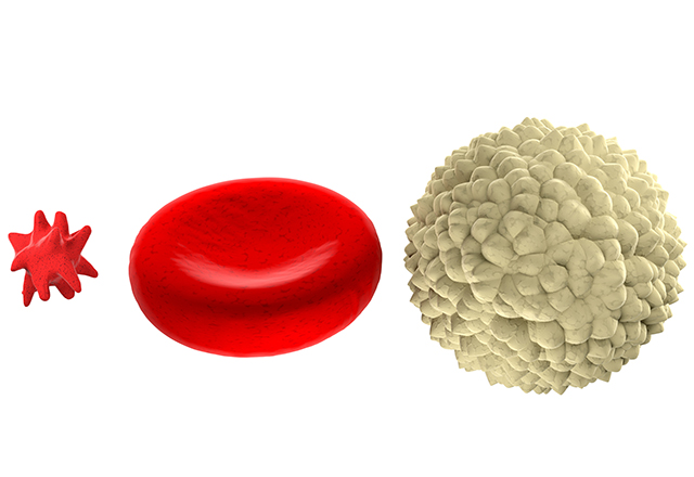 Main blood cells shown in scale, isolated on white background.