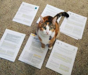 The author's cat sits atop a pile of papers.