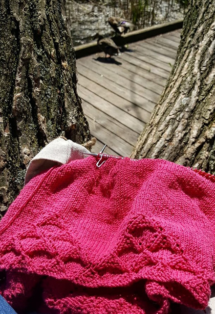 The view from a knitter in a tree.