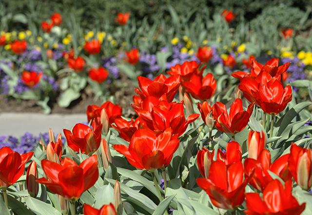Colorful flowers in bloom.