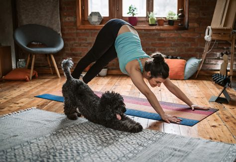 Young woman practicing downward facing dog pose playing with her pet in the living room.