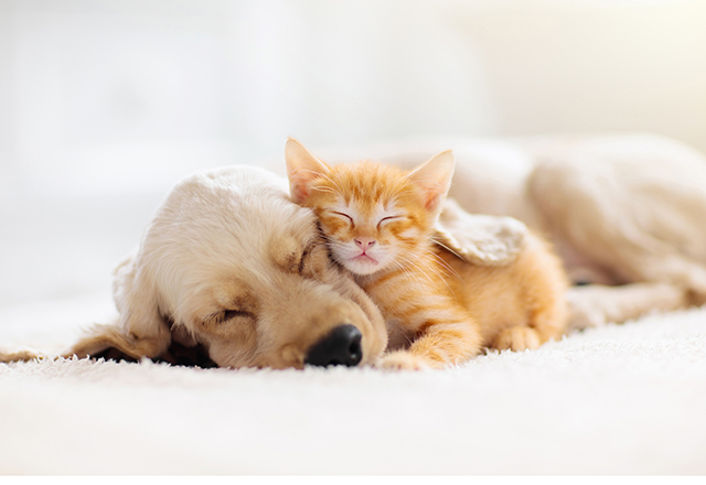 A puppy and kitten sleep soundly together.