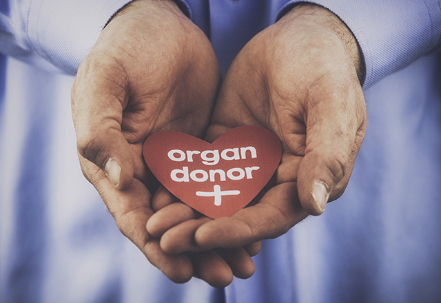 Male hands holding heart with a message that reads: Organ donor.
