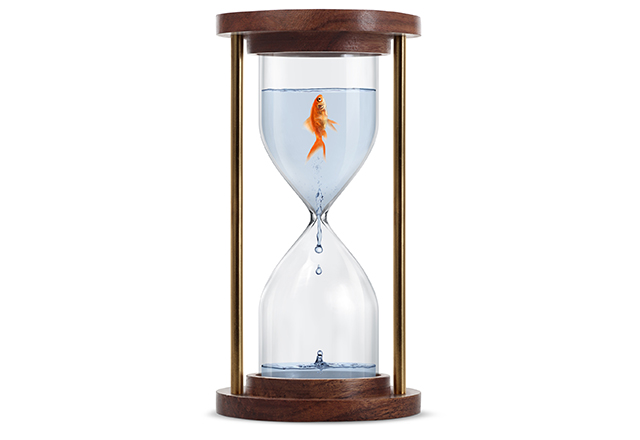 Goldfish trapped in hourglass. Isolated on white background.