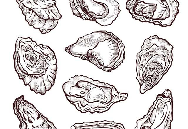 Multiple oyster line illustrations